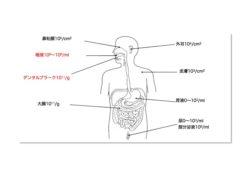 口の中の細菌数